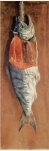 Yuichi salmon 1877