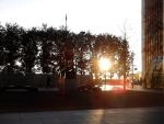 Sun through trees: what the Centaur sees